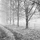 Misty Morn by Belinda  Churchill