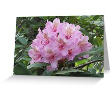 Wild Rhododendron Greeting Card