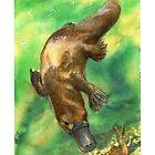 Platypus  by melhillswildart