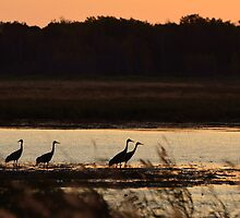 Sandhill Cranes at Sunrise by Mully410