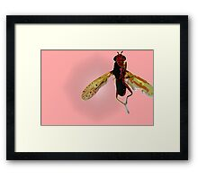Fly, lets fly away 3 of 3 Framed Print