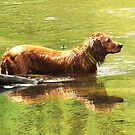 Cooling Off by lorilee