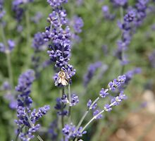 Bee Meets Lavender by TacoWorks