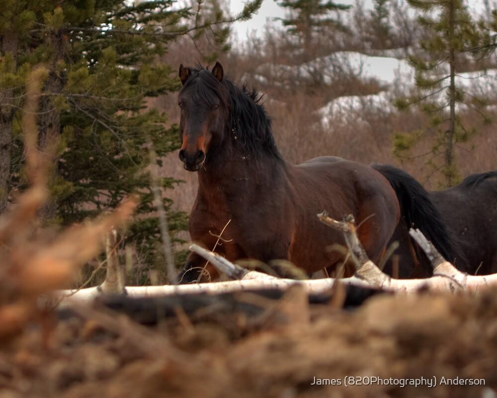 Rushing Stallion by JamesA1