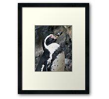 Posing Penguin Profile Framed Print