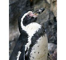 Posing Penguin Profile Photographic Print