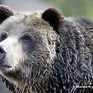 Grizzley Portrait by Charlene Aycock