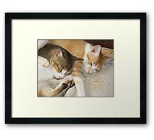 Ginger and Spike Framed Print