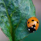 Spotty Dotty by Ray Clarke