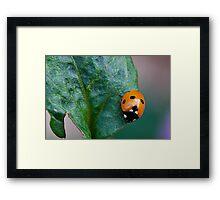Spotty Dotty Framed Print