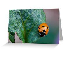 Spotty Dotty Greeting Card