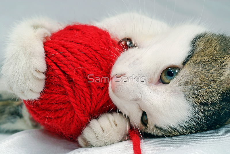 Kitten playing with red ball of yarn, close-up by Sami Sarkis