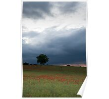 Last of the poppies Poster