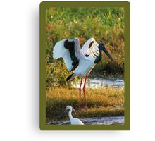 Jabiru (Policeman Bird) Canvas Print