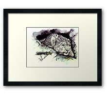 Elusive Nature Framed Print