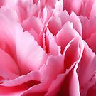 Lady Carnation in Pink by SmoothBreeze7