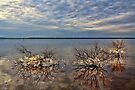 Icy Trees In The Lake by Carolyn  Fletcher