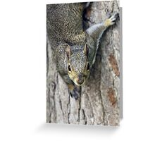 Curious gray squirrel Greeting Card