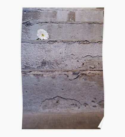 Daisy flower on concrete steps Poster