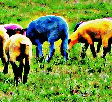 Coloured sheep2 by Liz Joyce
