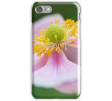 Lone Pink Japanese Anemone (iPhone & iPod case) iPhone Case/Skin