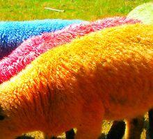 Coloured sheep3 by Liz Joyce