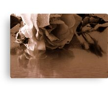 A faded rose Canvas Print