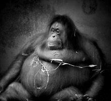 Animal Study by howpin