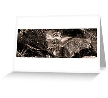 Waterstream in the forest Greeting Card
