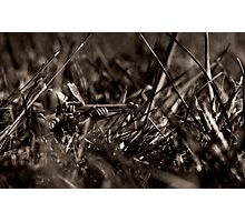 Lone Sniper Lith Photographic Print