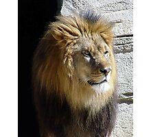 Lion King 1 Photographic Print