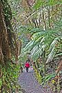 On the Leven Canyon Walk by Graeme  Hyde