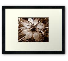 Sepia nigella Framed Print