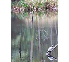 Reflective Resting Place Photographic Print