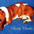 Meet &quot;Buddy&quot; by Deborah Lazarus