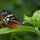 At the Royal Butterfly Conservatory, Ontario, Canada by Philippe Widling