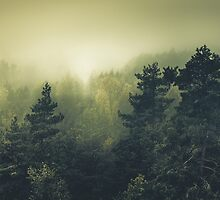 Forests never sleep by HappyMelvin