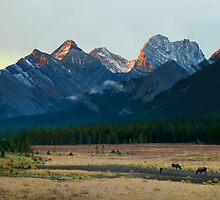 Moose feed in front of mountains illuminated by sunrise by Philippe Widling