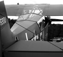 Piper L-4 by Kelly Chiara