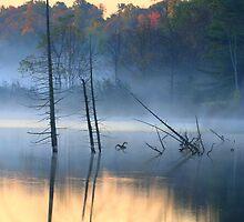 Silent Swamp by Raider6569