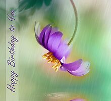Anemone by cards4U