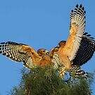 This is not a good place for the nest!! by jozi1