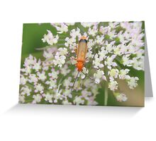 Red soldier beetle Greeting Card