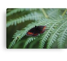 Scotch Argus butterfly Metal Print