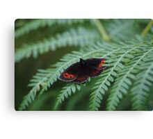 Scotch Argus butterfly Canvas Print
