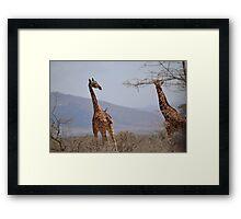 Reticulated Giraffes ~ Samburu National Park Framed Print