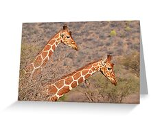 Reticulated Giraffes ~ Necking Greeting Card