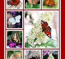 Butterfly-Collage by RosiLorz