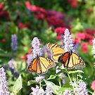 Jersey City, New Jersey, Liberty State Park, Butterflies, New Jersey by lenspiro