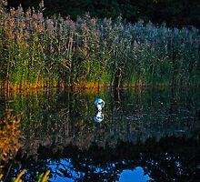 Balloon in the Reeds by Paul Gitto
